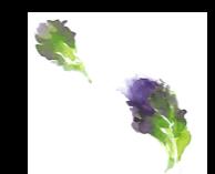 lettuce top